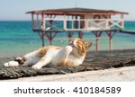 Stock photo cute cat on the black sea in odessa in the spring 410184589
