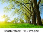 trees on meadow in sunny day..... | Shutterstock . vector #410196520