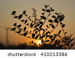 the leaf that silhouetted... | Shutterstock . vector #410213386