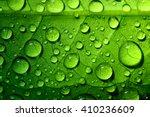 Beautiful Green Leaf Texture...
