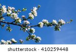a branch of an apricot on a... | Shutterstock . vector #410259448