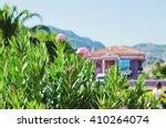 Nerium Oleander Blossom ...