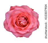 pink roses close up. background. | Shutterstock . vector #410307904