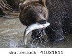 Fisher. Brown Bear