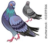 Urban Dove. Vector Illustration.