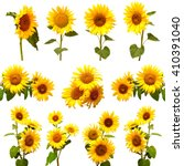 Collection Of Sunflowers...