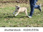 Stock photo boy jogging with cute happy fluffy puppy at park 410415556