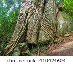 Trailing Roots Of Mature ...