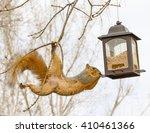 Squirrel With Bird Feeder