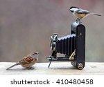 birds and antique camera | Shutterstock . vector #410480458