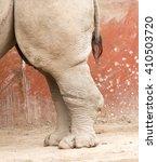 Rhino Feet On The Ground In...