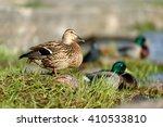 Birds and animals in wildlife...