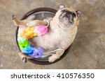 Stock photo pug lying to bath in a brown bowl with colorful sponge 410576350