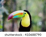 toucan bird toucans with their... | Shutterstock . vector #410688790