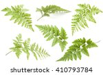 Beautiful Collection Fern ...