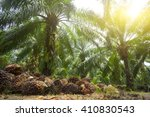 palm oil plantation and morning ... | Shutterstock . vector #410830543