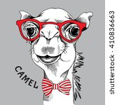 camel portrait in a red glasses ... | Shutterstock .eps vector #410836663