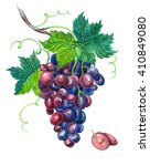 red grape with leaves on a... | Shutterstock . vector #410849080