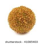 Plane Tree Fruit Flower