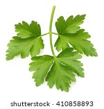 parsley herb isolated on white... | Shutterstock . vector #410858893