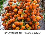 betel nut palm tree   Shutterstock . vector #410861320