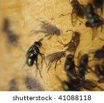 Flies Stuck To Flypaper Extrem...