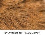 Fur Red Fox  Long Nap. Texture...