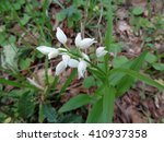 White flower of wild orchid in the forest - stock photo