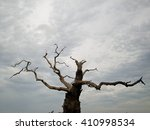 dead tree with peeling bark and ...   Shutterstock . vector #410998534