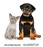 Stock photo cat and dog together sits on a white background 411050719