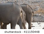 rear ends of three african... | Shutterstock . vector #411150448