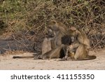 baboons have family social time ... | Shutterstock . vector #411155350