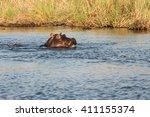 hippo  hippopotamus amphibius ... | Shutterstock . vector #411155374