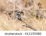 pied kingfisher  ceryle rudis ... | Shutterstock . vector #411155380