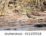 african wattled lapwing ... | Shutterstock . vector #411155518