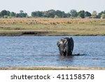 large african elephant ... | Shutterstock . vector #411158578