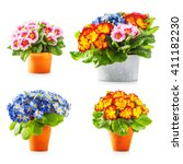 spring primrose flowers....   Shutterstock . vector #411182230