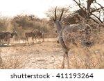eland group  taurotragus oryx ... | Shutterstock . vector #411193264