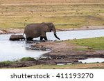 adult and calf elephant ... | Shutterstock . vector #411193270