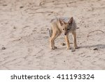 young black backed jackal pup ... | Shutterstock . vector #411193324