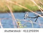 pied kingfisher  ceryle rudis ... | Shutterstock . vector #411193354