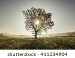 a lonely tree during sunrise ... | Shutterstock . vector #411234904