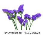 Blue Purple Statice Isolated On ...