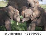 Stock photo baby elephant in afrika 411449080