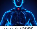 human thyroid gland anatomy. 3d ...   Shutterstock . vector #411464908