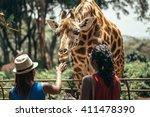 feeding a giraffe in national...   Shutterstock . vector #411478390