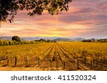 Napa Valley Autumn Vineyards ...