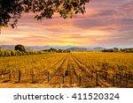 Napa Valley Autumn Vineyards ...