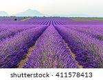 Lilac Lavender Fields...