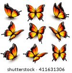 Beautiful Orange Butterfly In...